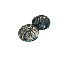 salt-and-pepper-urchin-black_sifnos-stoneware